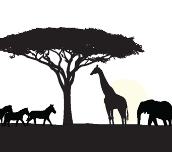 African Sillouette