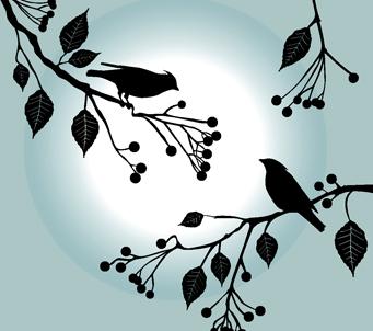 Birdsona Branch