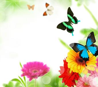 Butterflies and Gerberas