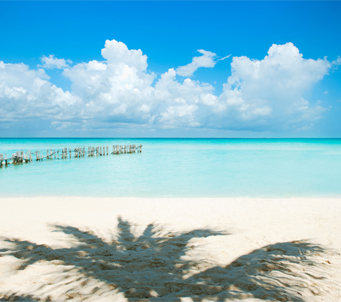 Caribbean Shade