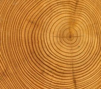 Cut TreeTunk