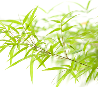 Mini Bamboo leaves