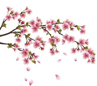 Pink Sakura Blossem