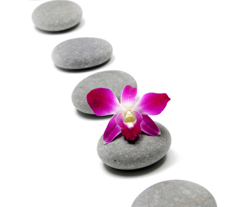 Pink orchid with pebbles