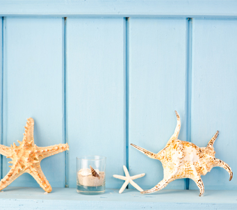 Seashells on Blue Wall
