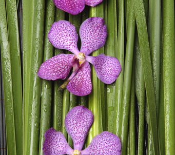 Three Purple Orchids on Leaves