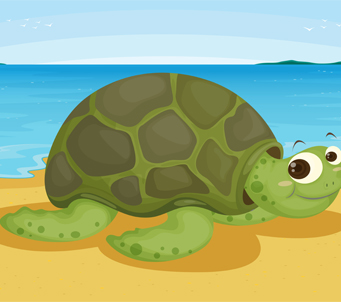 Turtle on SeaShore