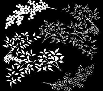White Floralon Black background